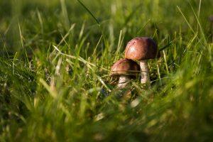 Milujete houbaření? Přinášíme to nejzajímavější ze světa hub