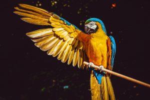 Věděli jste, že v mnichovské zoo žil hajlující papoušek?