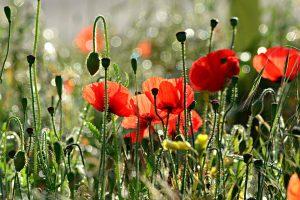 Věděli jste, že nejstarší květina rozkvetla před 174 miliony let?
