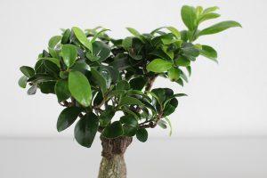 Trendem ve světě bydlení jsou moderní pokojové rostliny. Jaké to jsou?