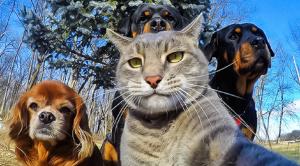 Nejzajímavější fakta o zvířatech… 15 zajímavostí o obyvatelích zvířecí říše, u kterých se možná i zasmějete