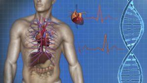 Zajímavosti o lidském těle… 15 faktů, které vás překvapí i nadchnou